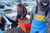 Salieron a pescar hace 20 días y no han regresado; los reportan como desaparecidos