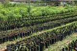 Ecología emprende campaña de reforestación en las comunidades de Angostura
