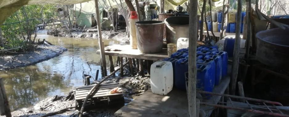 Sedena y Policía Estatal asegura presunto laboratorio en un manglar
